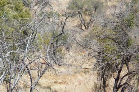 Mev olifant besluit selfs om uit die bosse te beweeg vir jack se